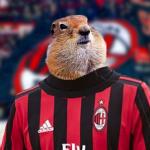 Suseł z Milanu